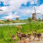 טיול משפחתי להולנד