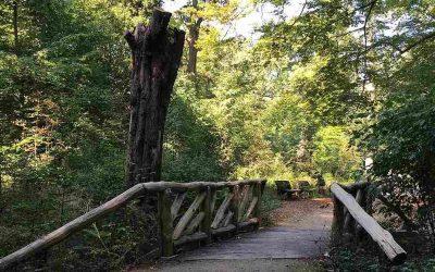alkmaarderhout park
