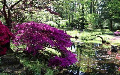 japanese garden the hague